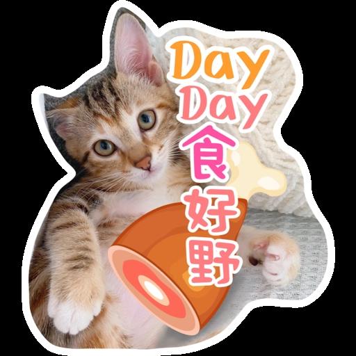 Kira Chan CNY 小新粒子賀年貼紙 - Sticker 8