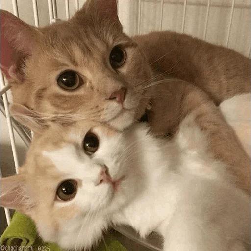 cats with threatening aura - Sticker 10