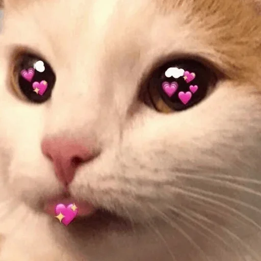 cats with threatening aura - Sticker 14