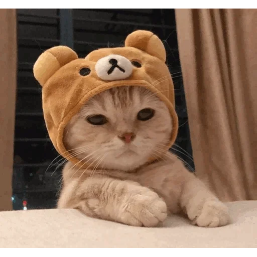 cats with threatening aura - Sticker 8