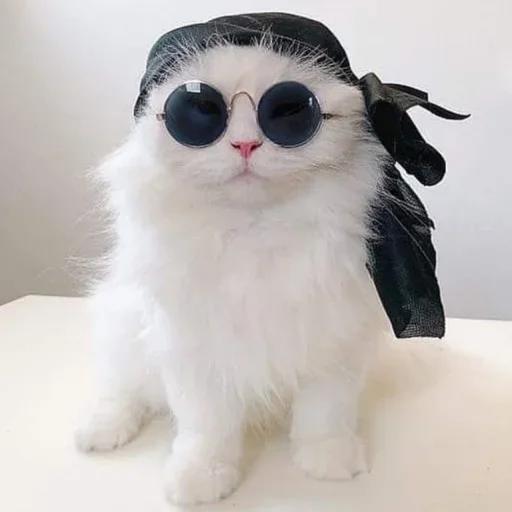 cats with threatening aura - Sticker 19
