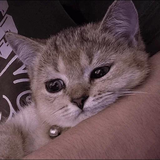 cats with threatening aura - Sticker 15