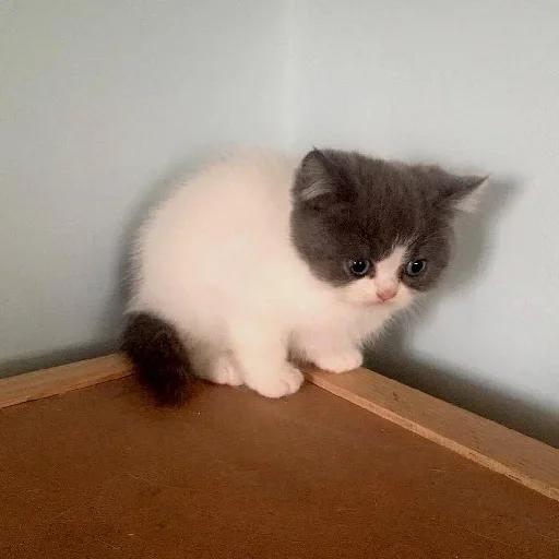 cats with threatening aura - Sticker 2
