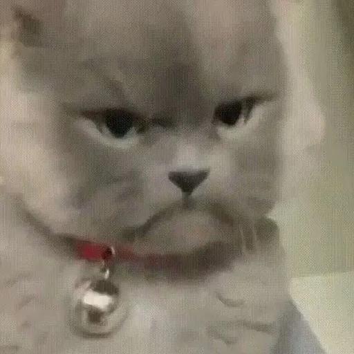 cats with threatening aura - Sticker 30