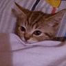 cats with threatening aura - Tray Sticker