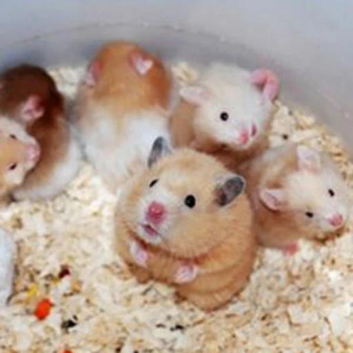 鼠鼠 - Sticker 22