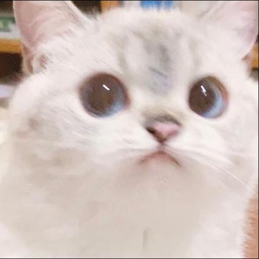 WB_cat - Sticker 2
