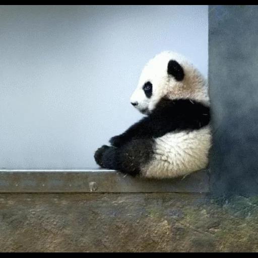 panda - Sticker 1