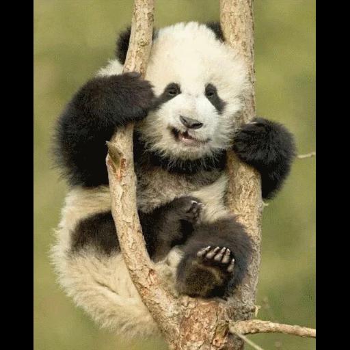 panda - Sticker 17
