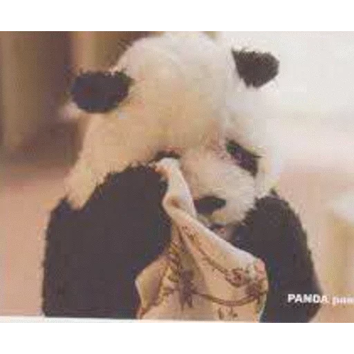 panda - Sticker 18