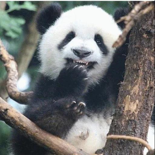 panda - Sticker 8