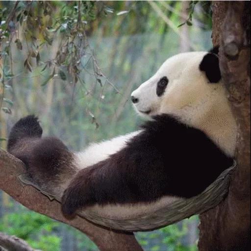 panda - Sticker 7