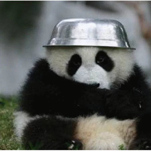 panda - Sticker 13