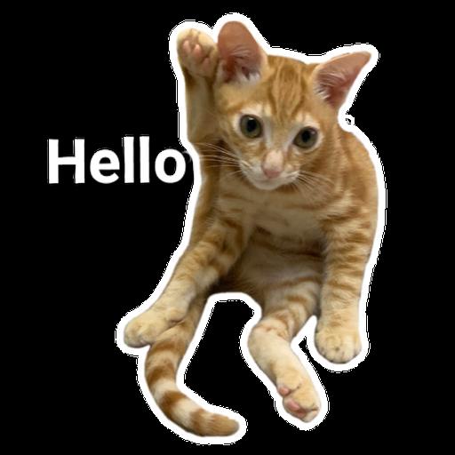 Catssss on board - Sticker 15