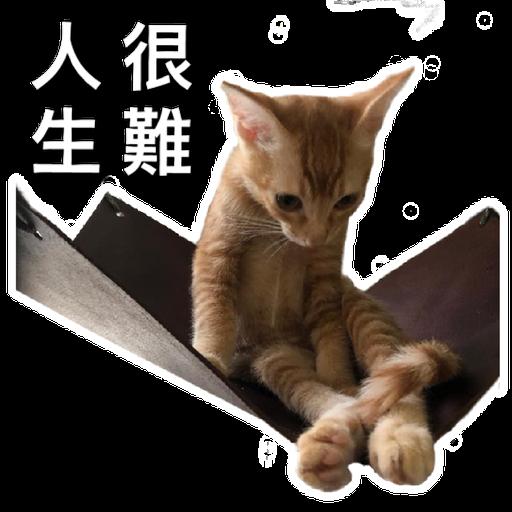 Catssss on board - Sticker 14