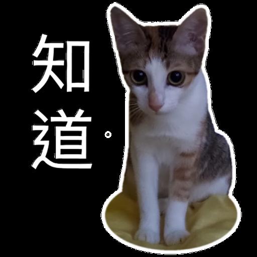 Catssss on board - Sticker 6