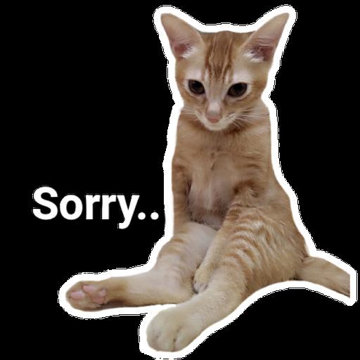 Catssss on board - Sticker 11