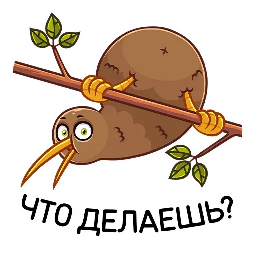 Kiwi bird - Sticker 5