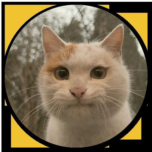 Stupid cats - Sticker 25