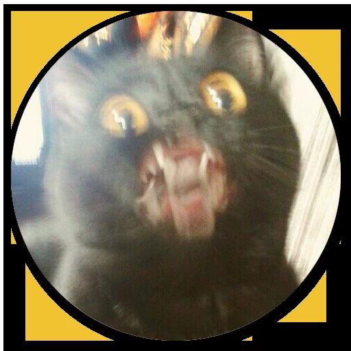 Stupid cats - Sticker 1