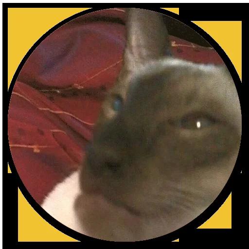 Stupid cats - Sticker 13