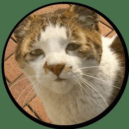Stupid cats - Sticker 9