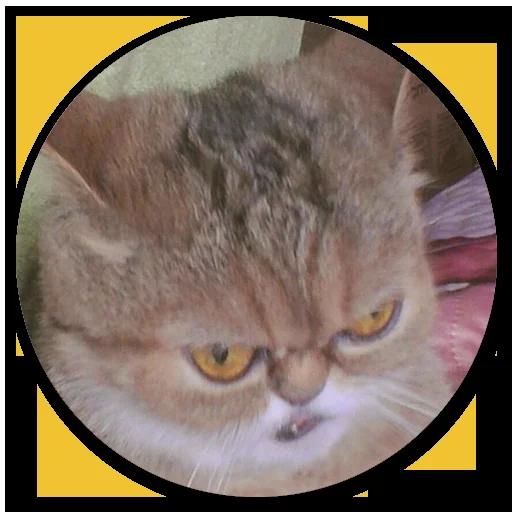 Stupid cats - Sticker 10