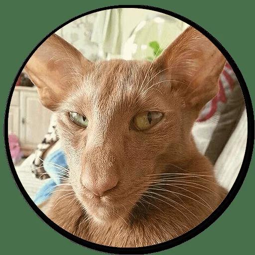 Stupid cats - Sticker 6