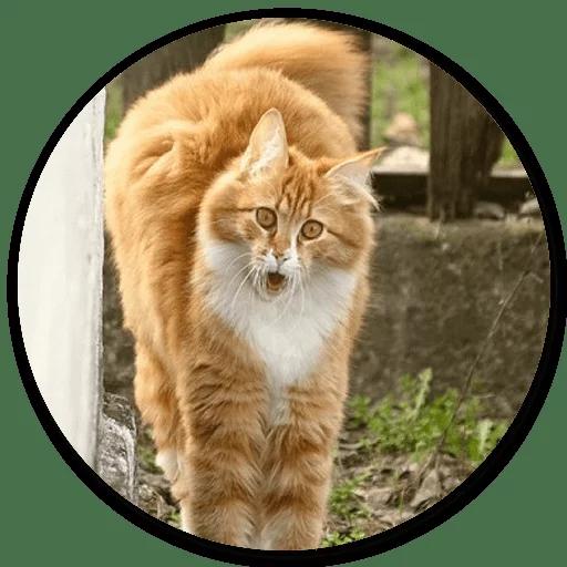 Stupid cats - Sticker 27