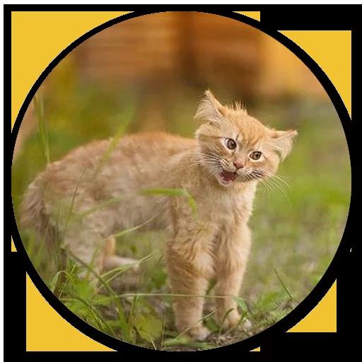 Stupid cats - Sticker 23
