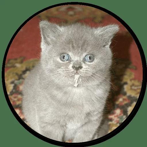 Stupid cats - Sticker 24