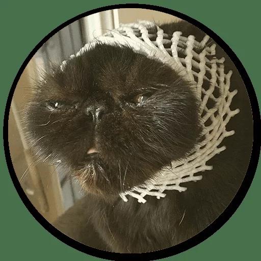 Stupid cats - Sticker 12