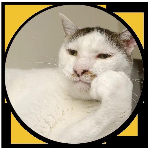 Stupid cats - Sticker 7