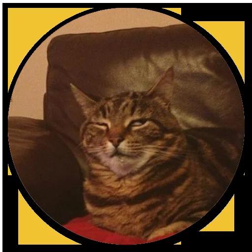 Stupid cats - Sticker 15