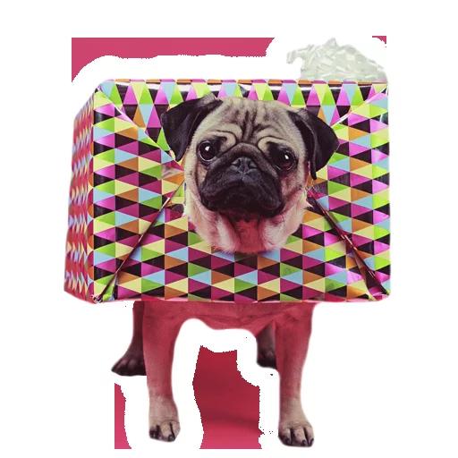 MeetPugs - Sticker 6