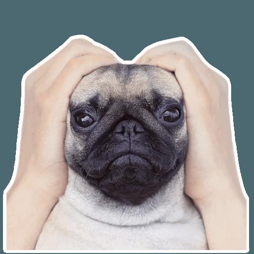 MeetPugs - Sticker 10