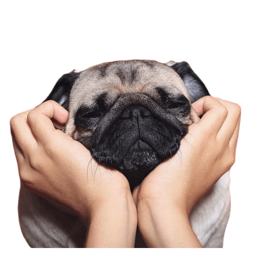 MeetPugs - Sticker 1