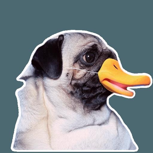 MeetPugs - Sticker 9