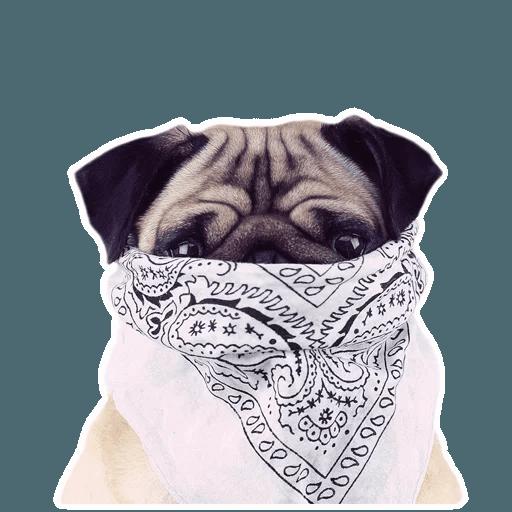 MeetPugs - Sticker 11