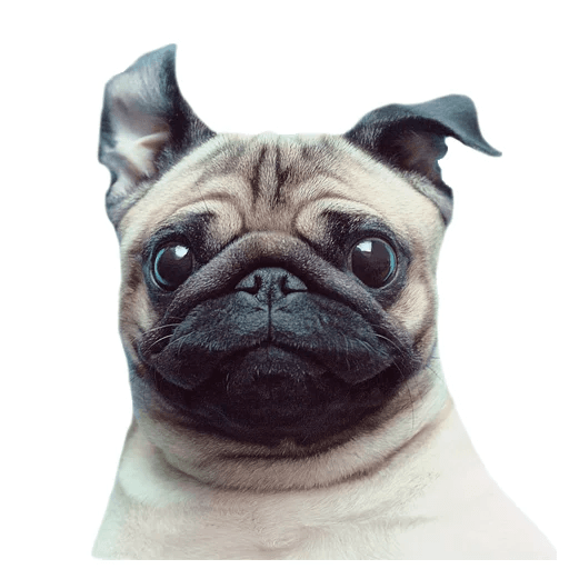 MeetPugs - Sticker 5