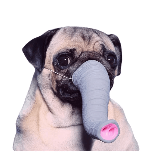 MeetPugs - Tray Sticker