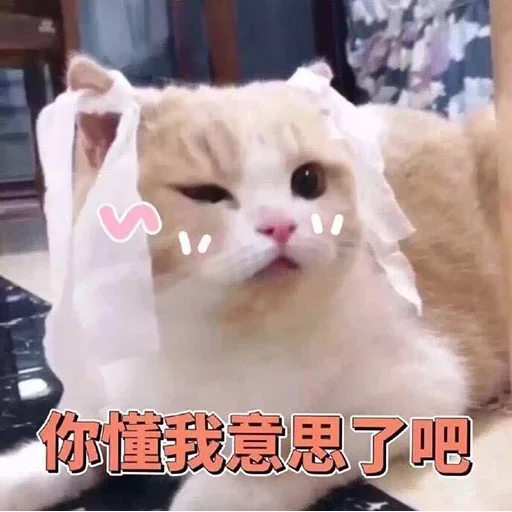 CuteCat2 - Sticker 8