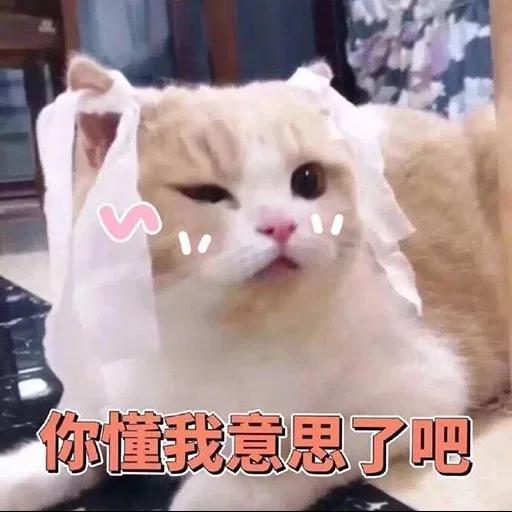 CuteCat2 - Sticker 8