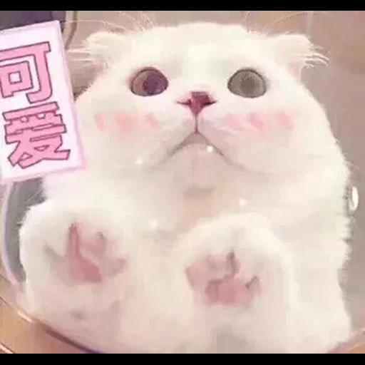 CuteCat2 - Sticker 7