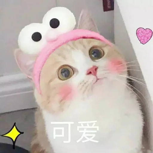 CuteCat2 - Sticker 30