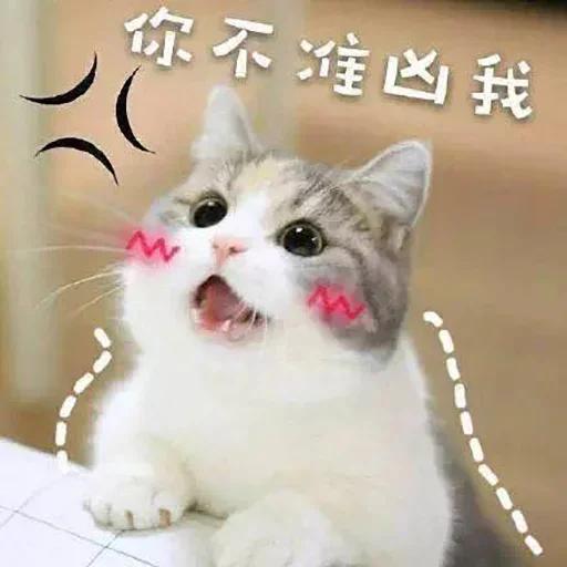 CuteCat2 - Sticker 10