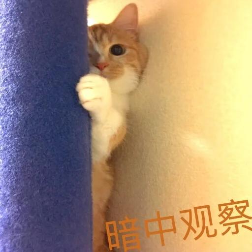 CuteCat2 - Sticker 29