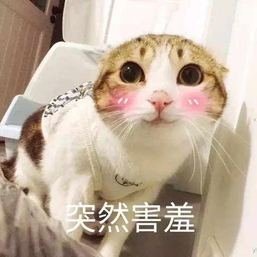 CuteCat2 - Sticker 5