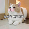 CuteCat2 - Tray Sticker