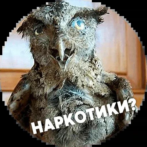 Птицы тупицы - Sticker 14